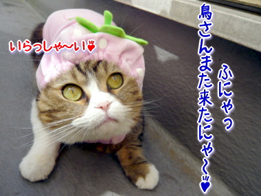 帽子8.jpg