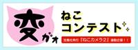 猫変顔コンテスト.jpg