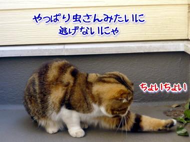 葉っぱ2.jpg