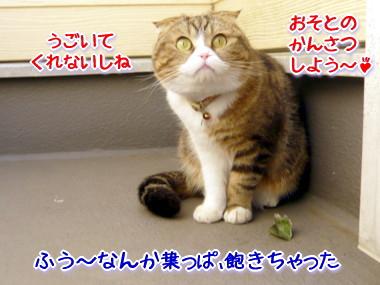 葉っぱ5.jpg