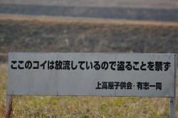 2月5日カワセミ探し.jpg