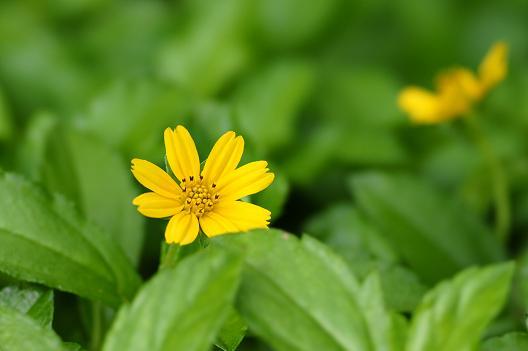 flowerSTF1(f5.6).JPG