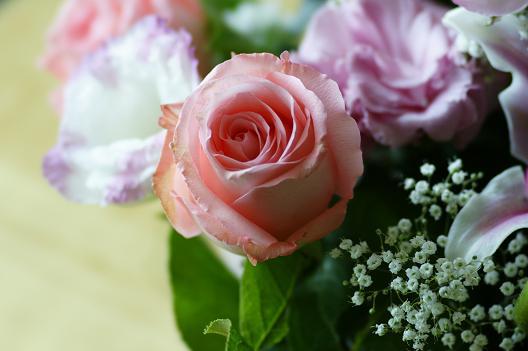 flowerSTF2(f4.5).JPG