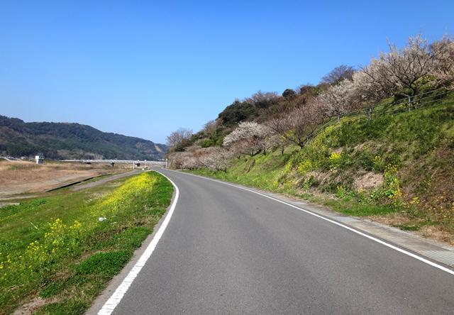 8 本日一番春らしい道.JPG