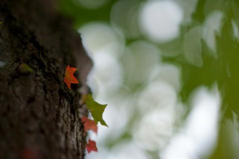 ちっこい秋.jpg