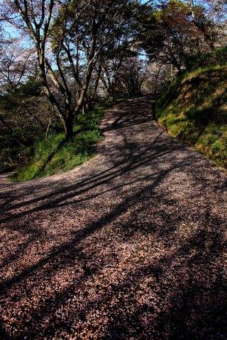 桜の坂道.jpg