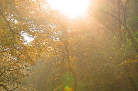 秋の光.jpg