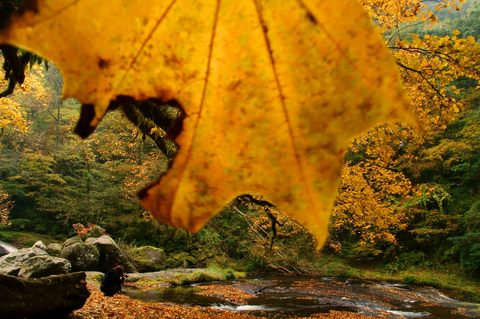 秋色の葉.jpg