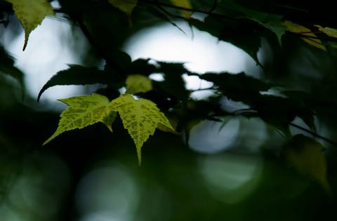 黄葉.jpg