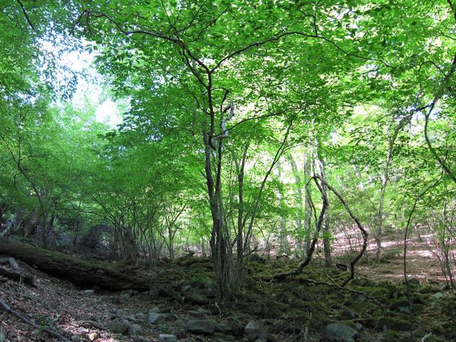 ウグイス谷の新緑