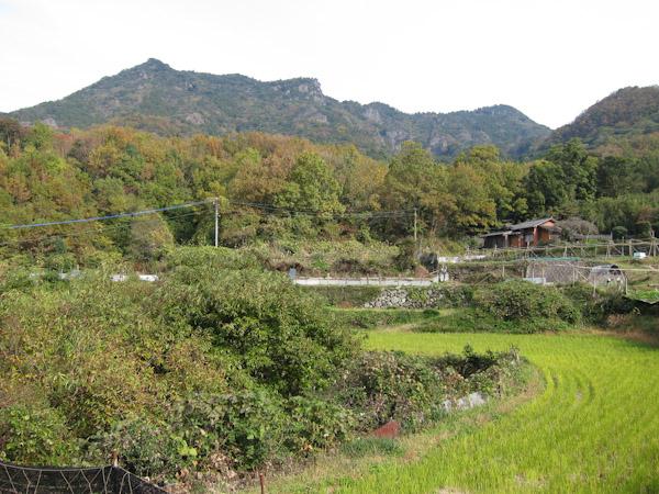 津波戸山の山容