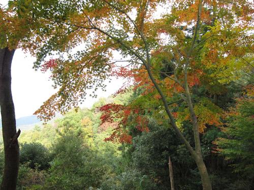 鎮南山の紅葉