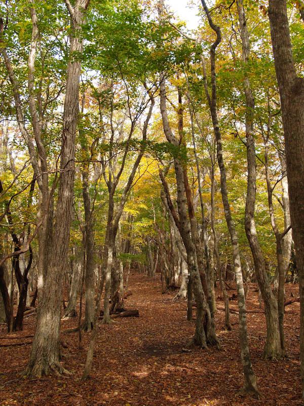 求菩提山登山歩道の紅葉