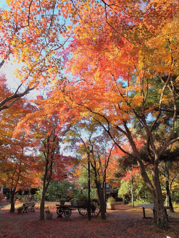 亀の井別荘の紅葉