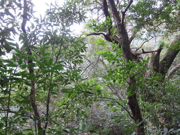 照葉樹の森