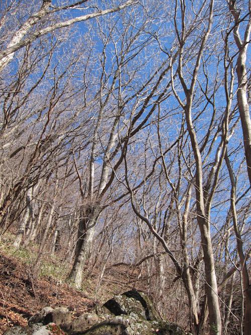 冬枯れの南登山道