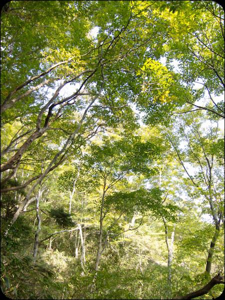 心地よい広葉樹林