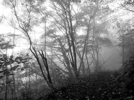 霧の倉木山登山道