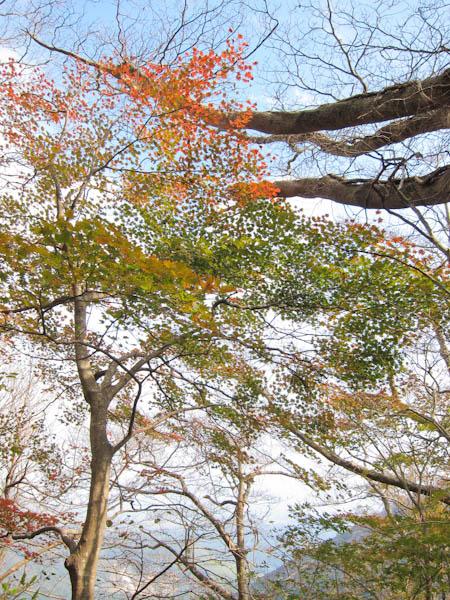 石楠花尾根の紅葉1