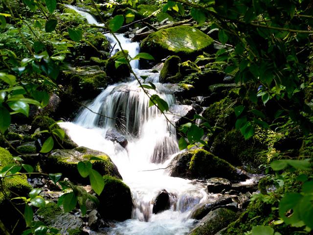 湧水源の下流