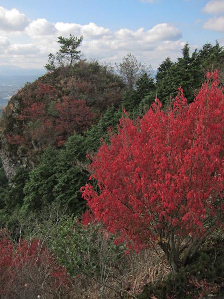 マユミの紅葉