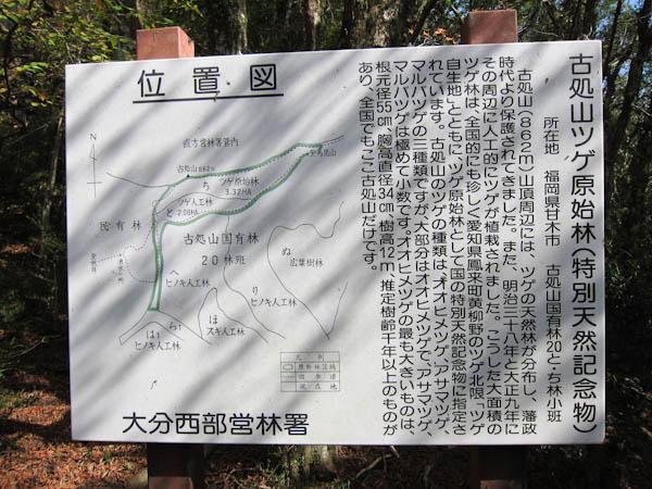 ツゲ原始林の案内板