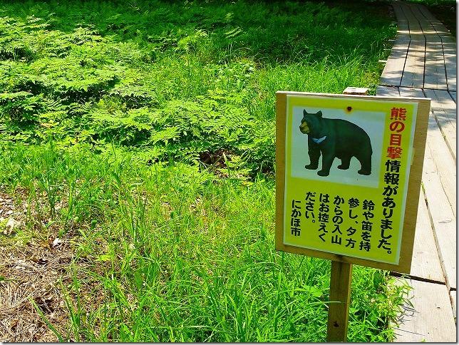 獅子ヶ鼻湿原 熊