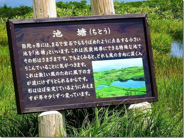 月山八合目  弥陀ヶ原(みだがはら)湿原