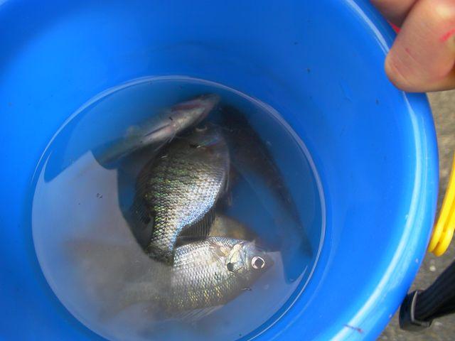 魚釣り090712 魚釣りb000.JPG