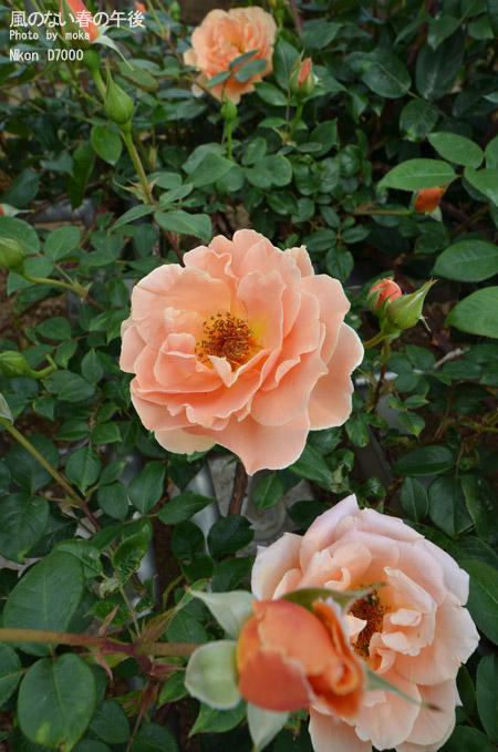 20110514_jindaiji36.jpg