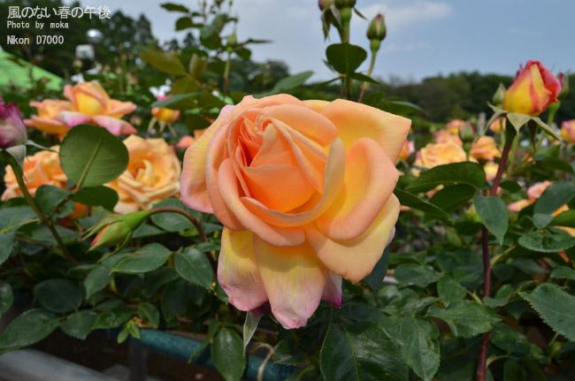 20110514_jindaiji41.jpg