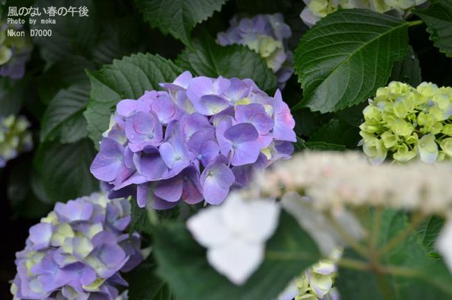 20110611_asukayama22.jpg