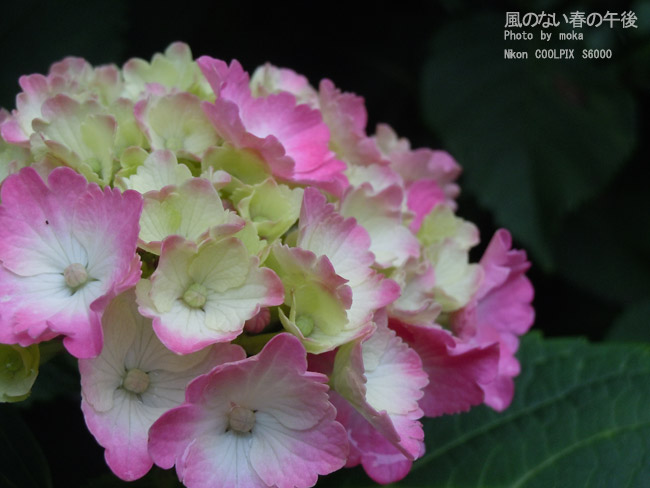 20110611_asukayama66.jpg
