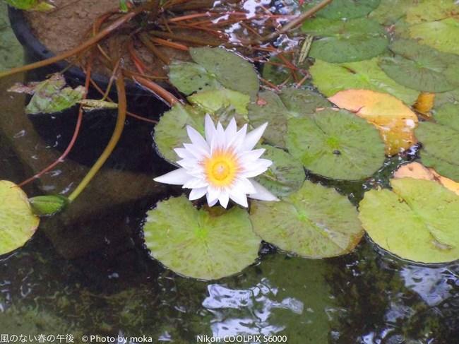 水辺に浮かぶ花