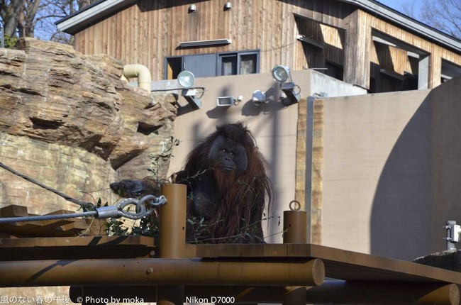 20120109_tama-zoo036.jpg