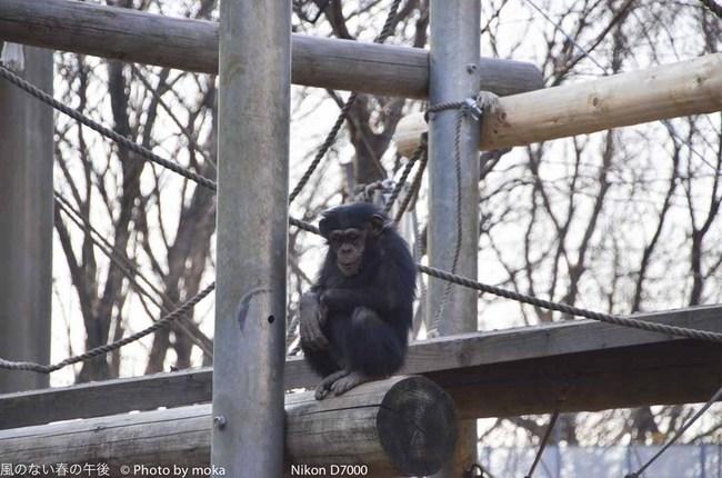 20120109_tama-zoo100.jpg