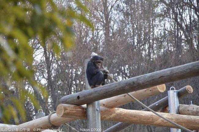 20120109_tama-zoo105.jpg