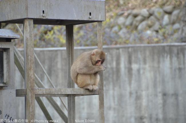 20120109_tama-zoo183.jpg