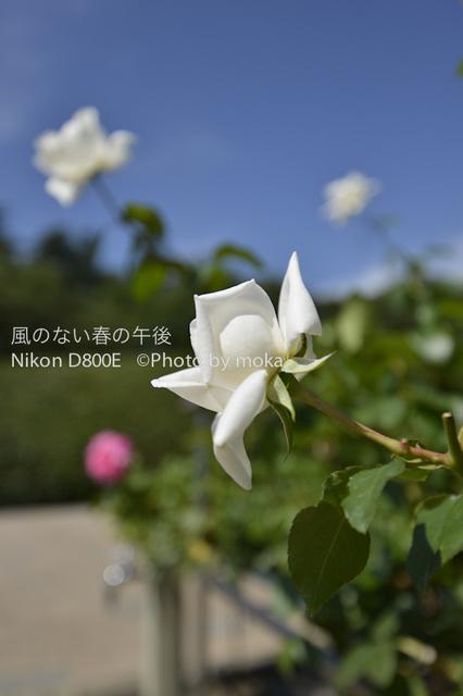 20120711_jindaiji13.jpg