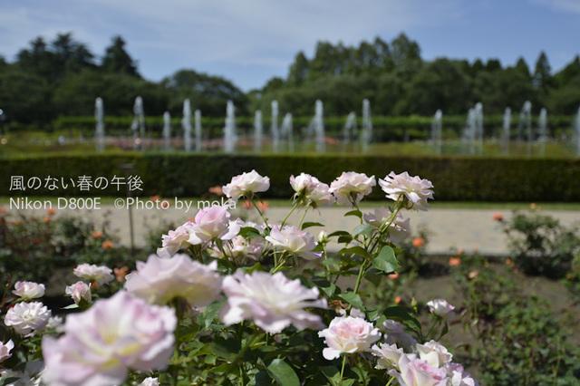 20120711_jindaiji25.jpg