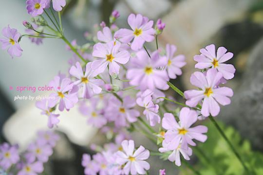 spring color.jpg