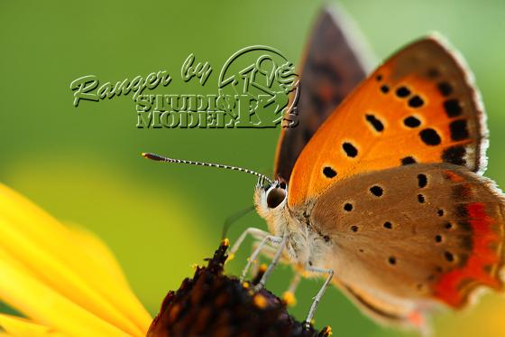 Ranger's (4).jpg