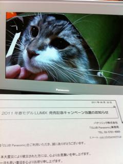 image-20110630151609.png