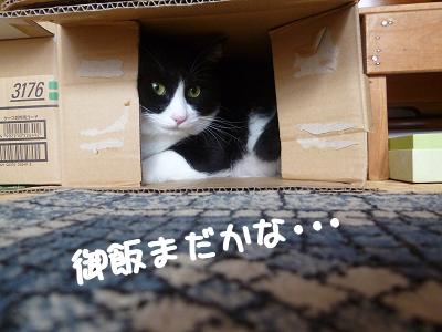 P1030229編集②.jpg