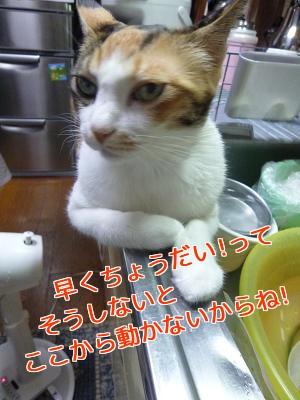 P1040020編集②.jpg