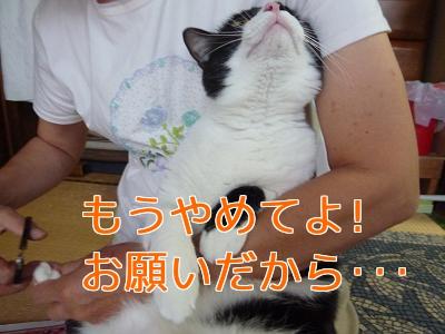 P1040147編集②.jpg