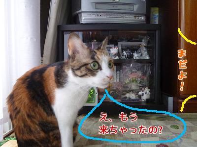 P1040707編集②.jpg