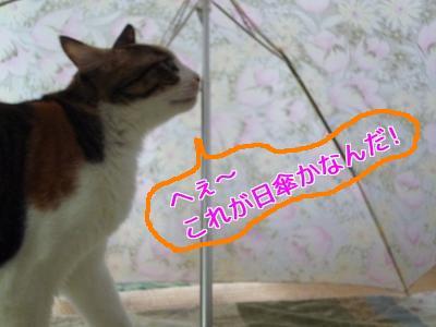 P1050018編集②.jpg