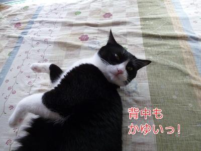 P1050642編集②.jpg