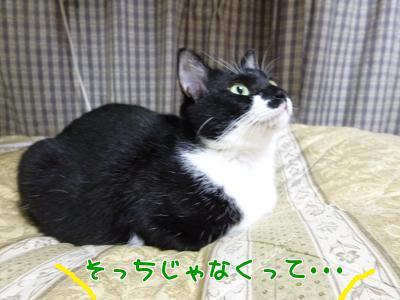 P1080933編集②.jpg